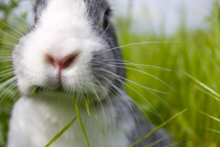 Rabbit, Rabbit, Year of the Rabbit